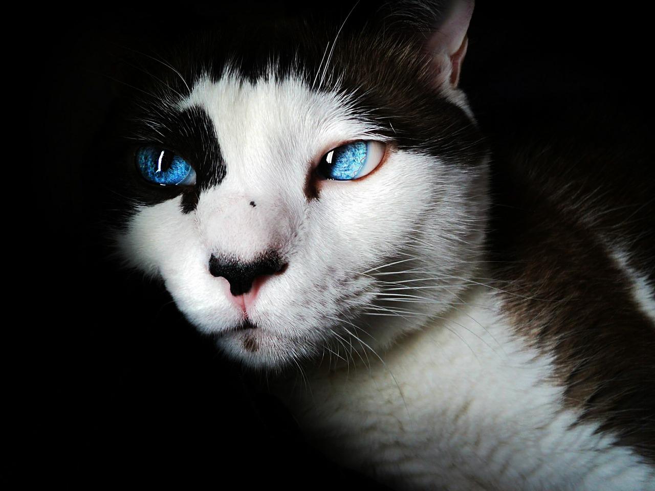 Zapalenie oka u kota