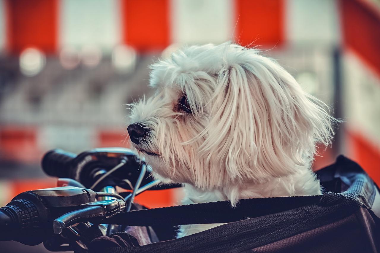 Nie wiesz na jakiego psa do domu się zdecydować? Oto rozwiązanie!