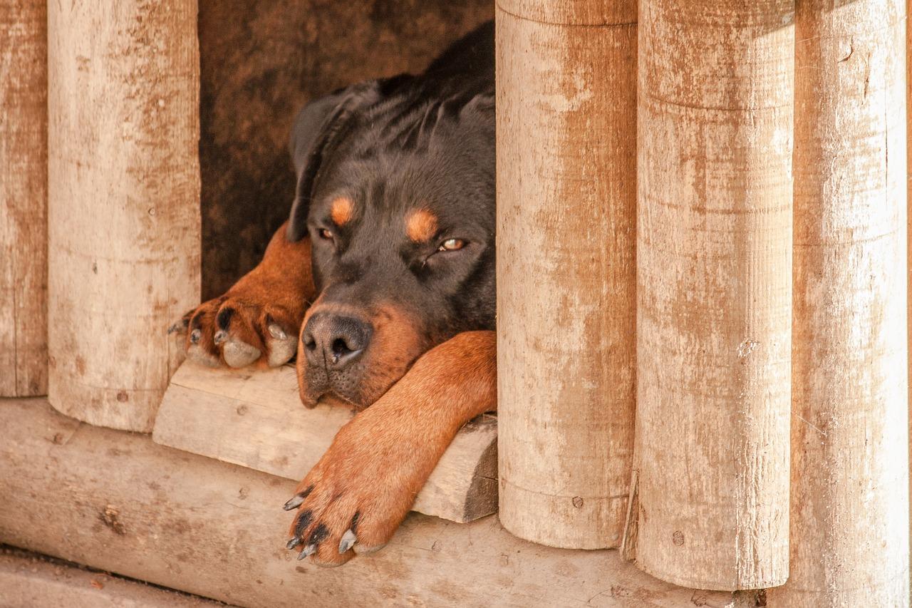 Budy bez tajemnic – jaka buda dla psa jest najlepsza?
