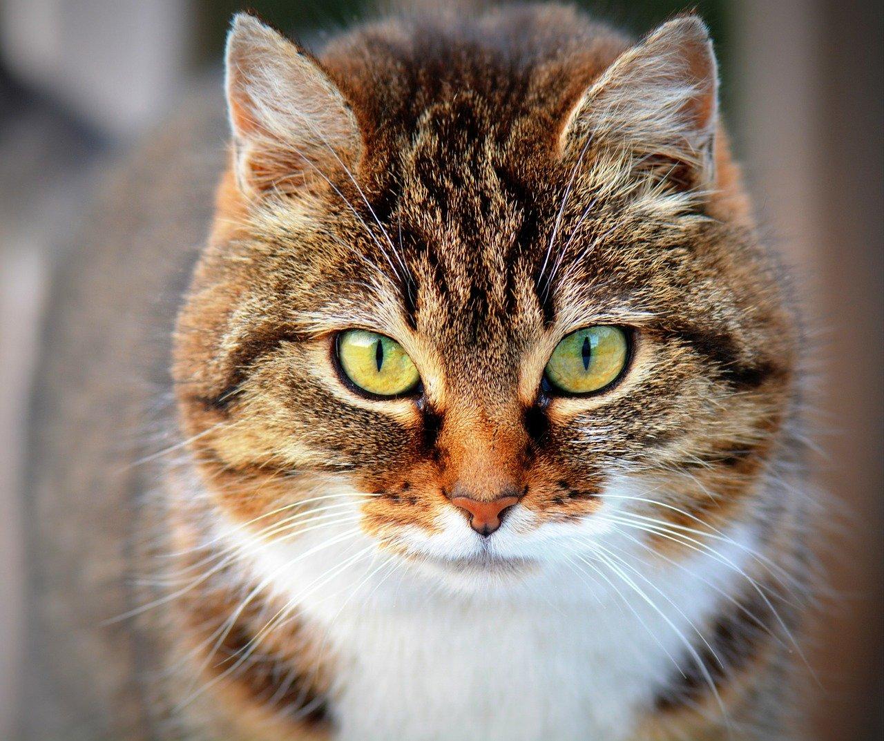 Gdy kot sika poza kuwetą – co robić?