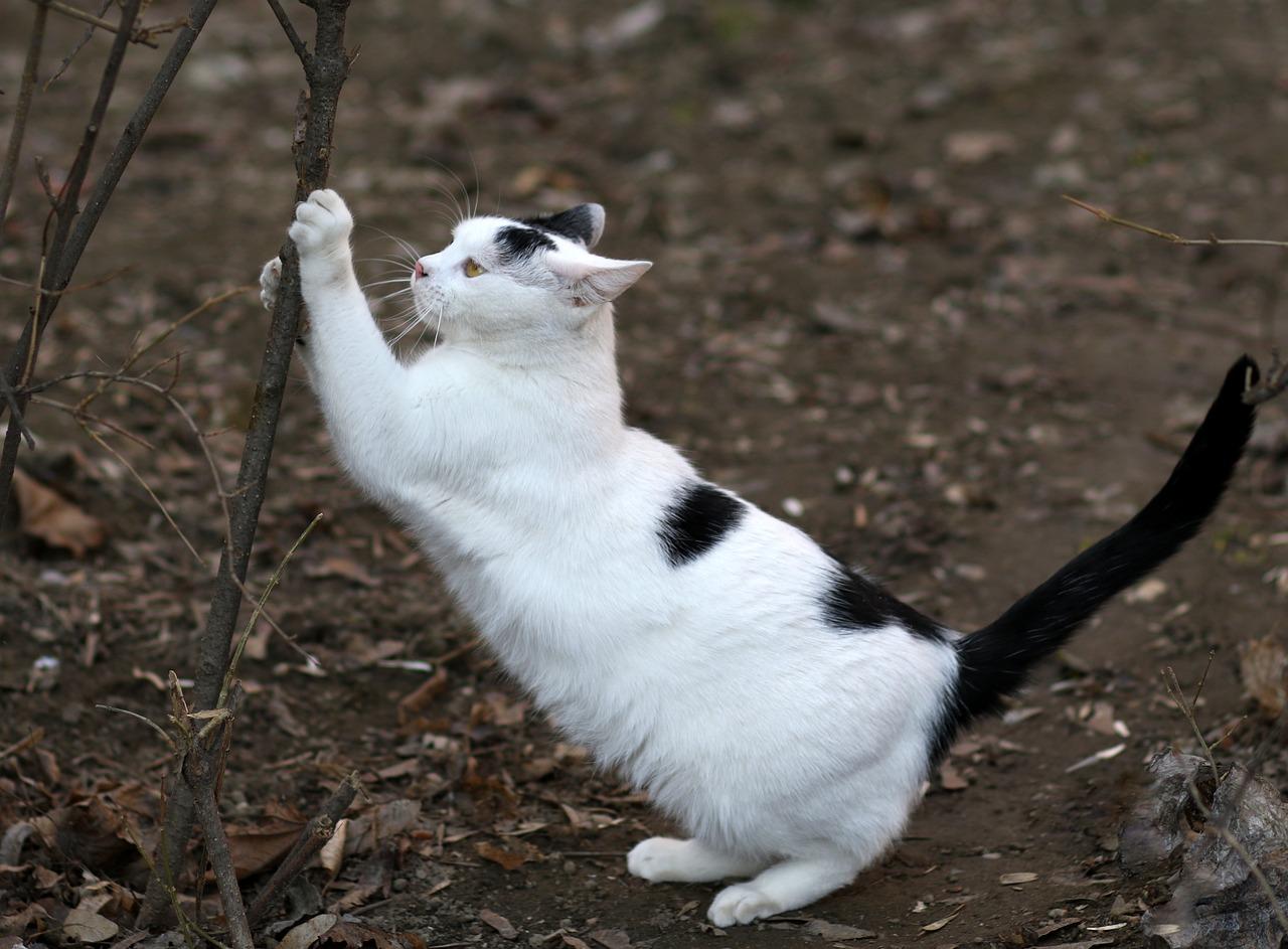 Usuwanie pazurów u kota – dlaczego to zły pomysł?