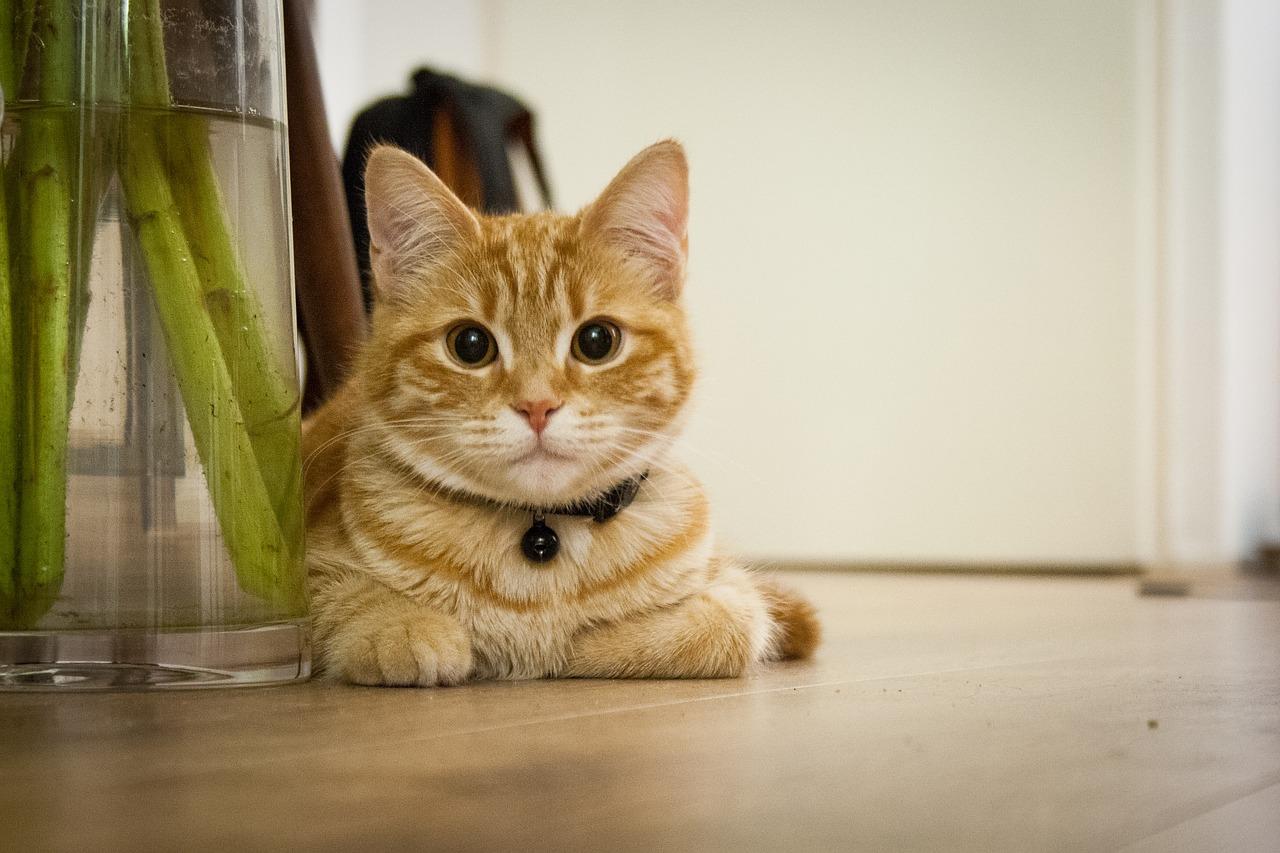 Czy koty faktycznie jedzą mleko, czyli co jedzą koty domowe?