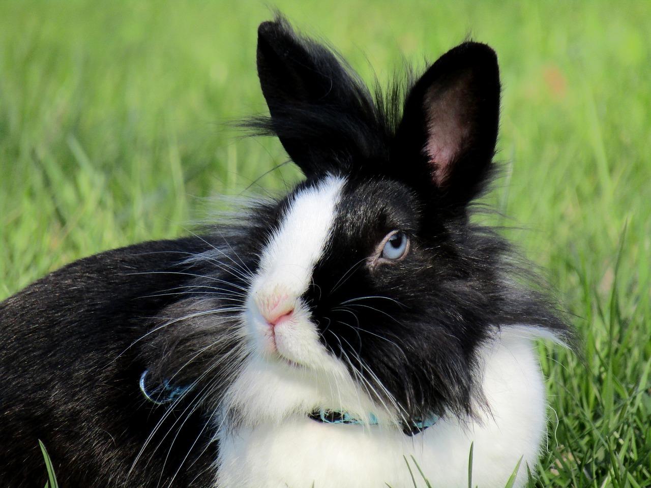 Kilka słów o gatunkach królików
