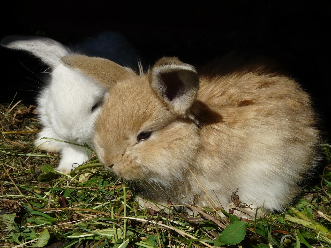 Jak zrobić poidła dla królików samemu?