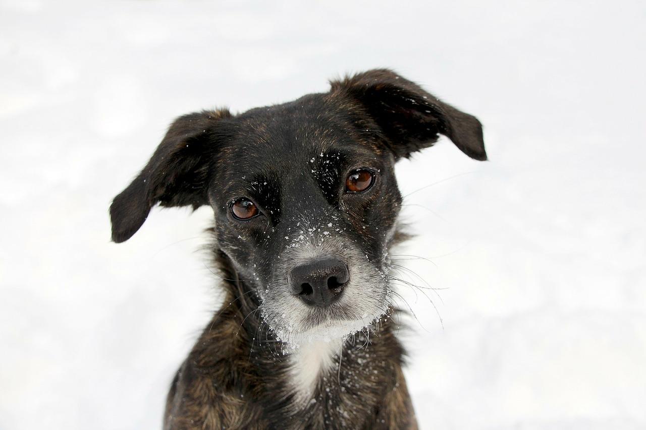 Rozwolnienie u psa – co robić?