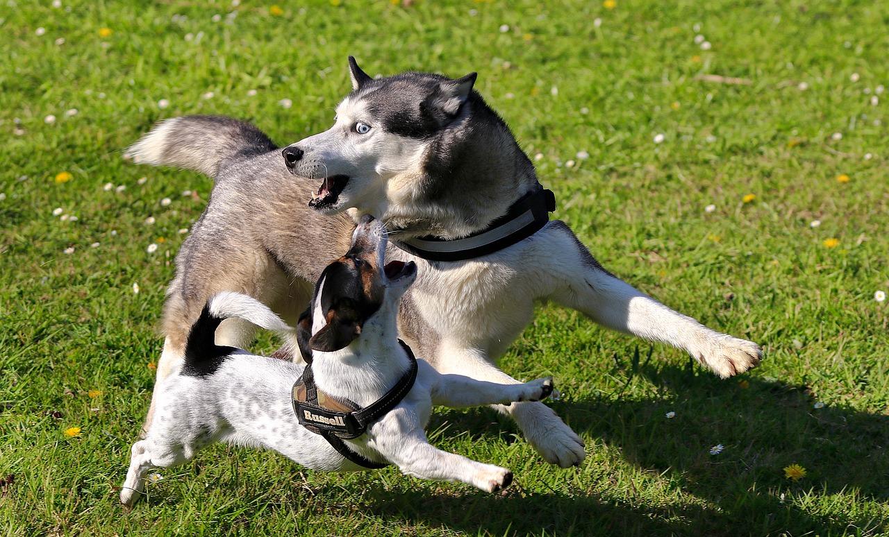 Zabawy umysłowe dla psa – świetna zabawa i trening dla pupila