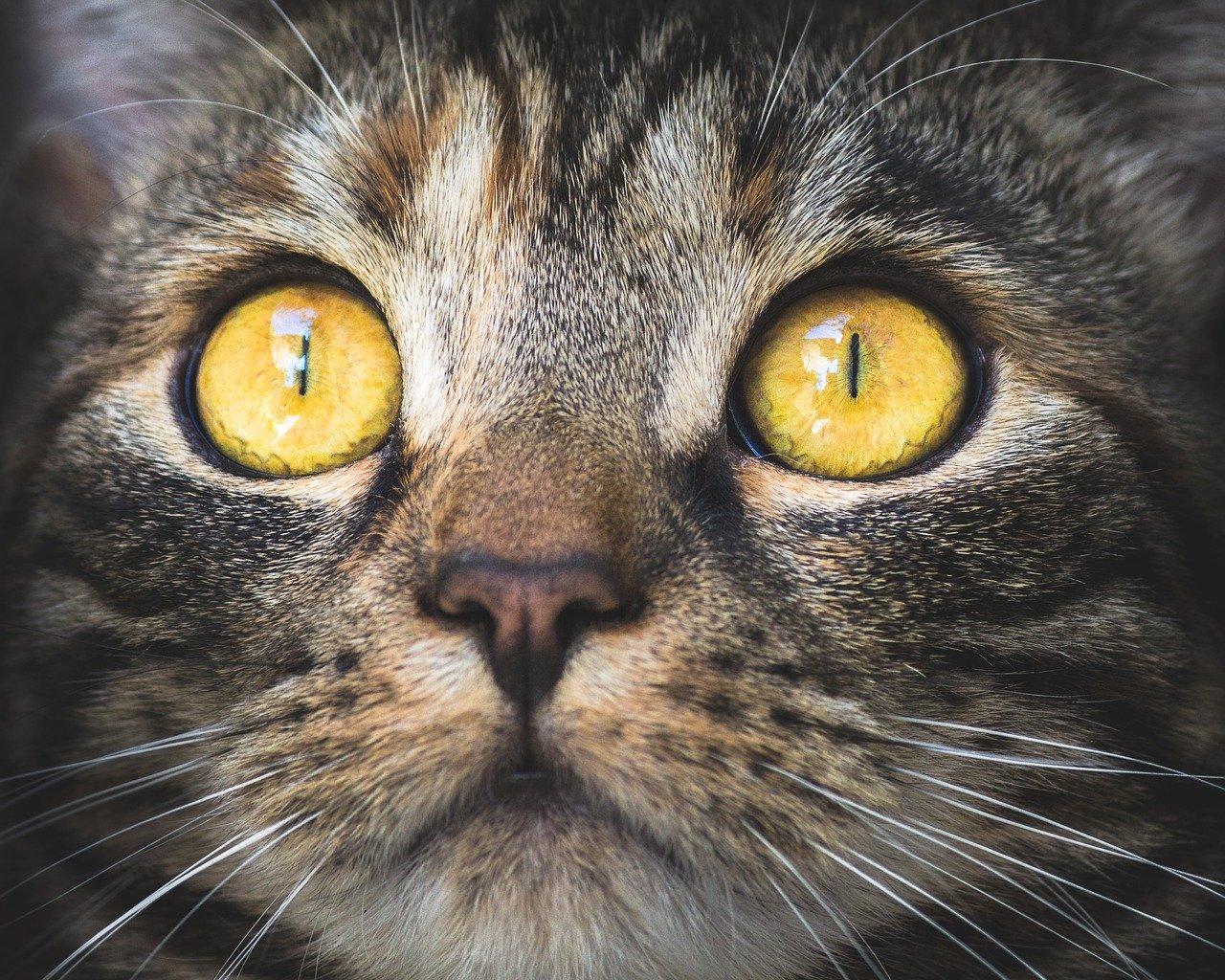Zdrowie pupila domowego