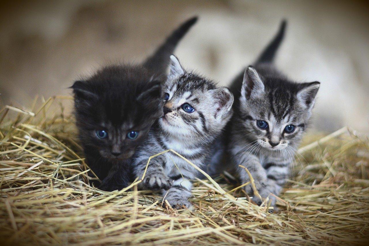 Jak opiekować się małym zwierzątkiem domowym?