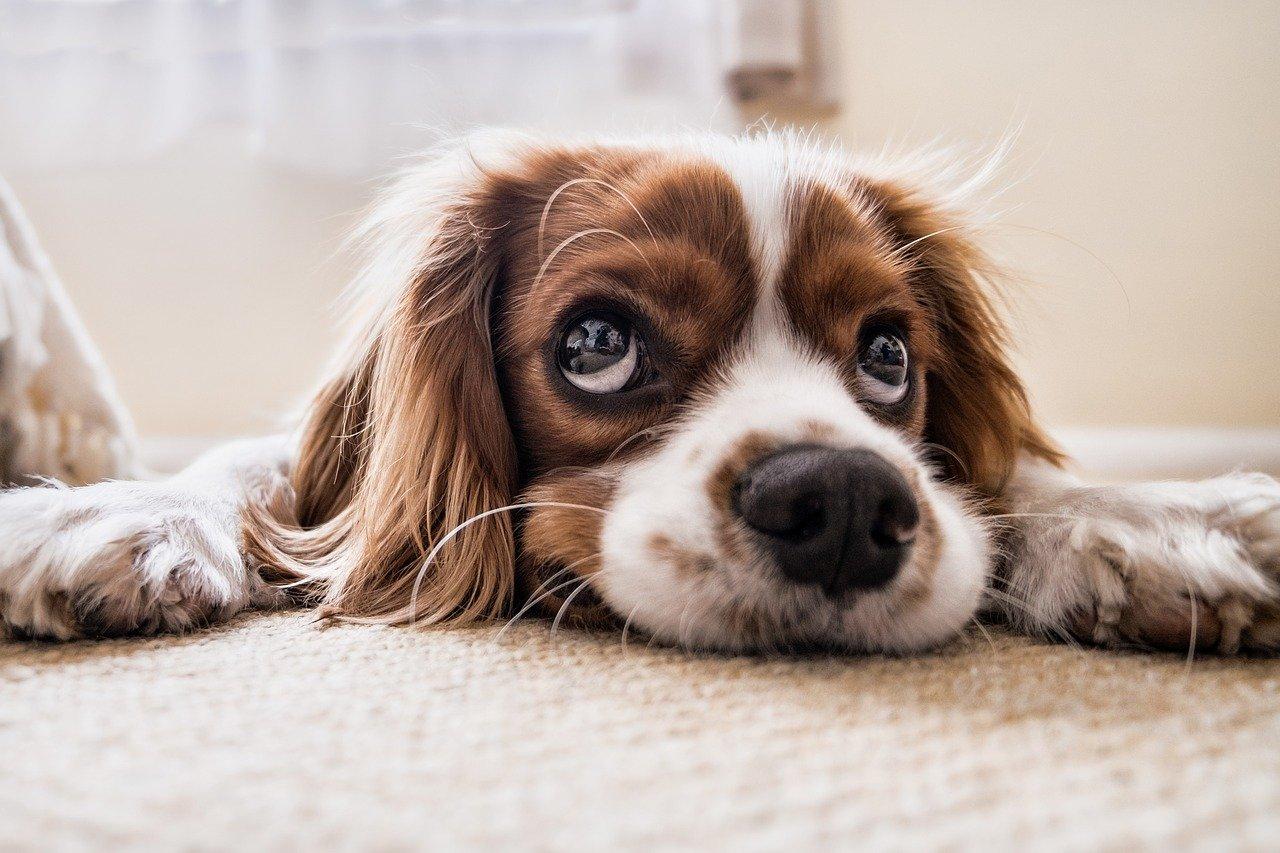 Jak reagować, gdy dzieje się coś złego z psem?