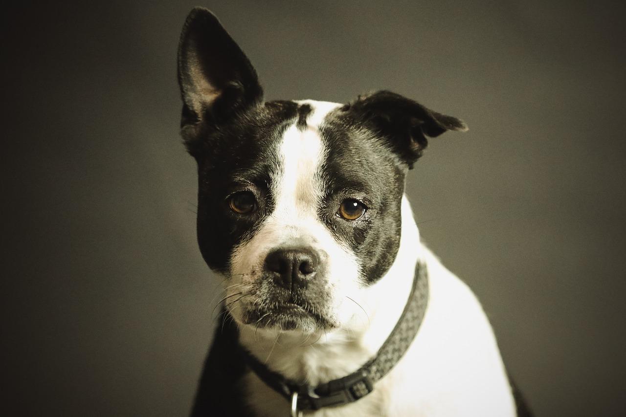 Kiedy iść z psem do weterynarza?