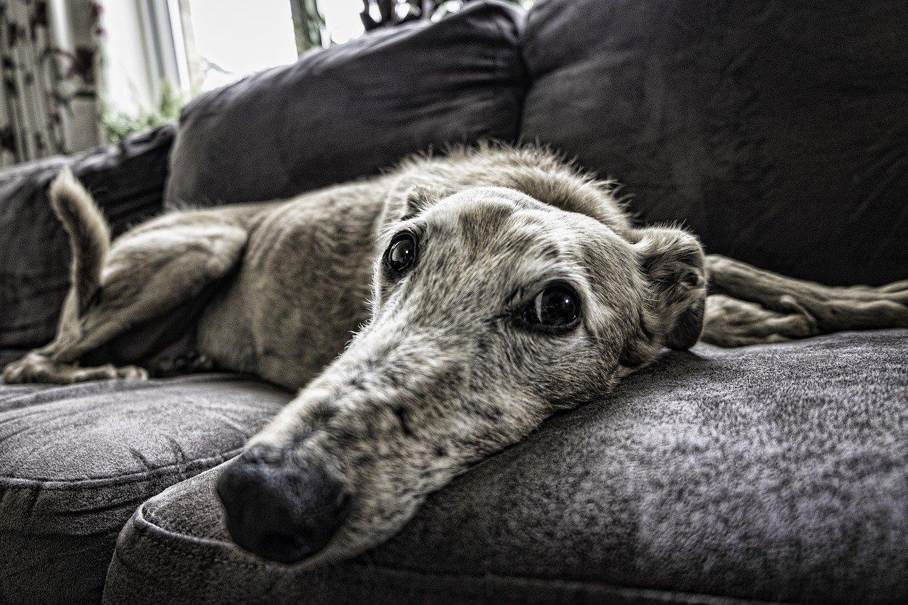 Komfortowe warunki dla psa – jak o nie zadbać?