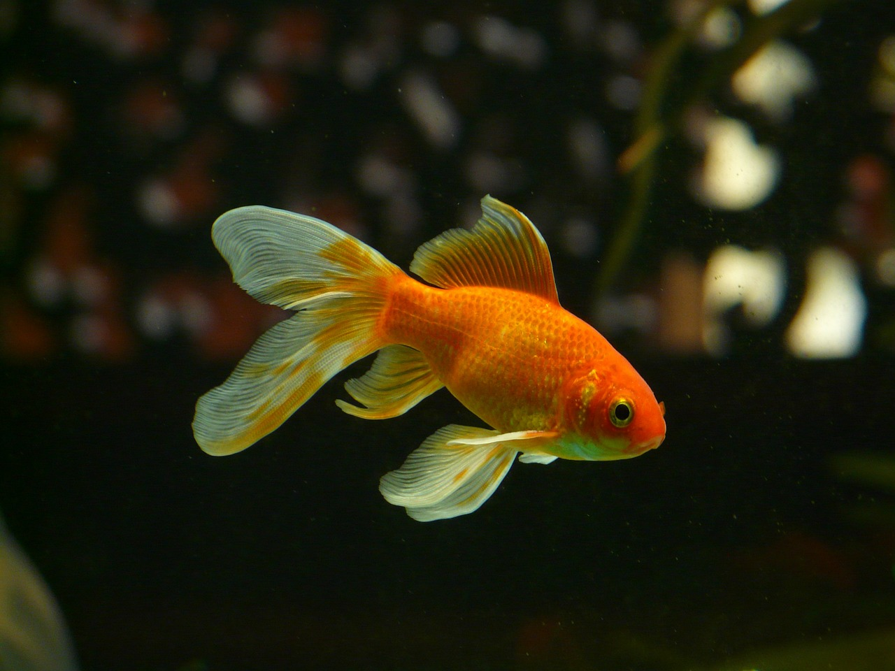 Jakie popularne ryby warto mieć w akwarium?