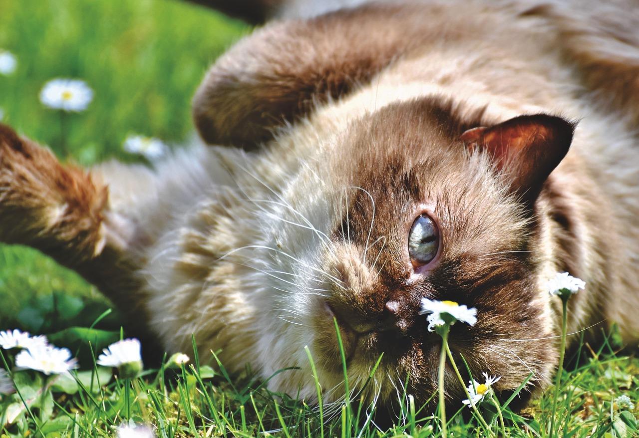 Wyjątkowe koty brytyjskie