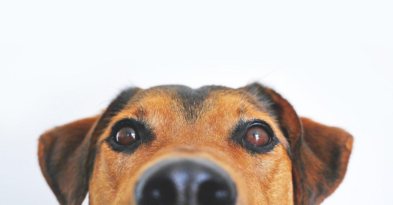 Prawidłowe żywienie psów