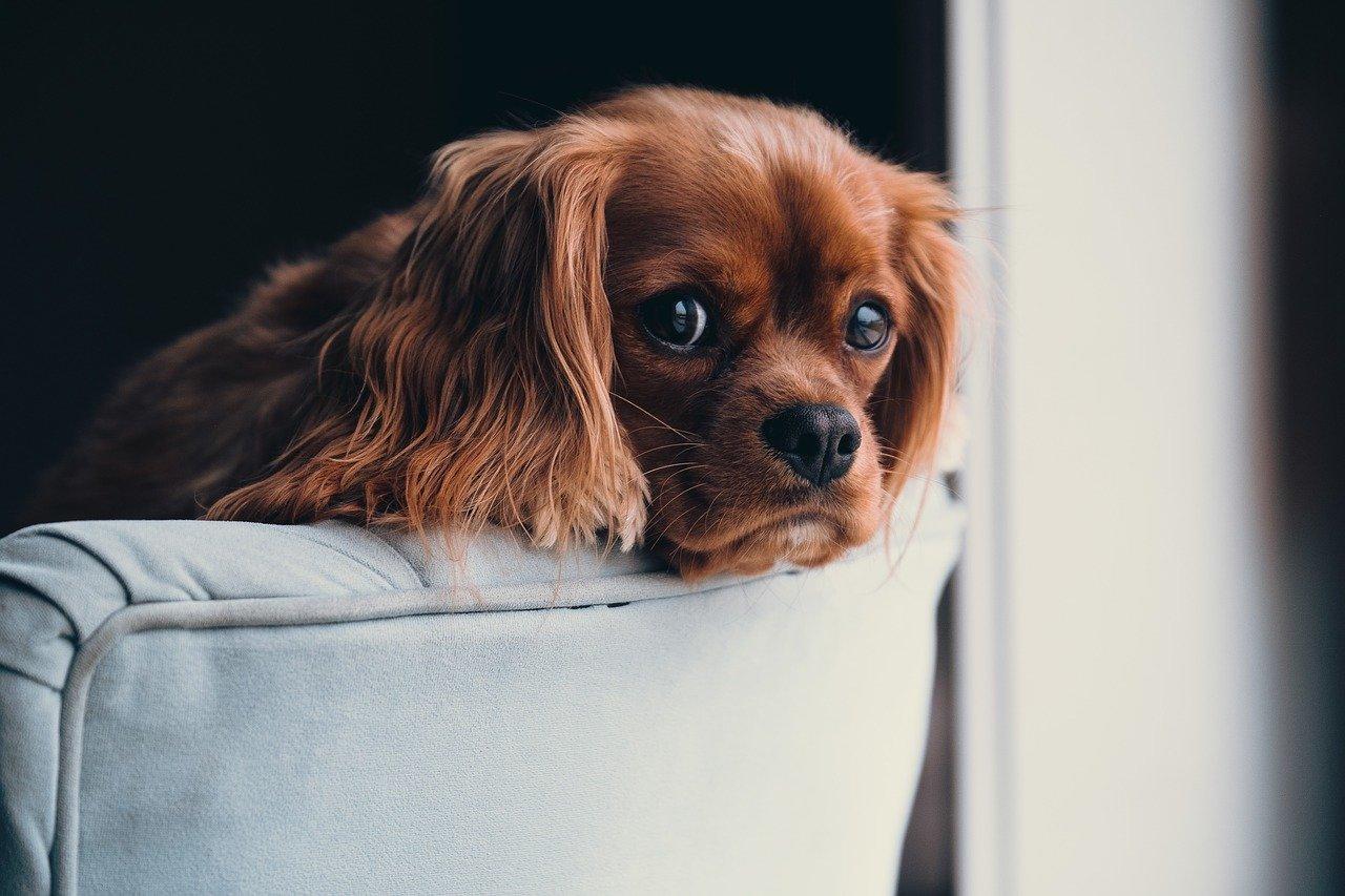 Legowisko czy budka? Jaki domek dla psa w domu?