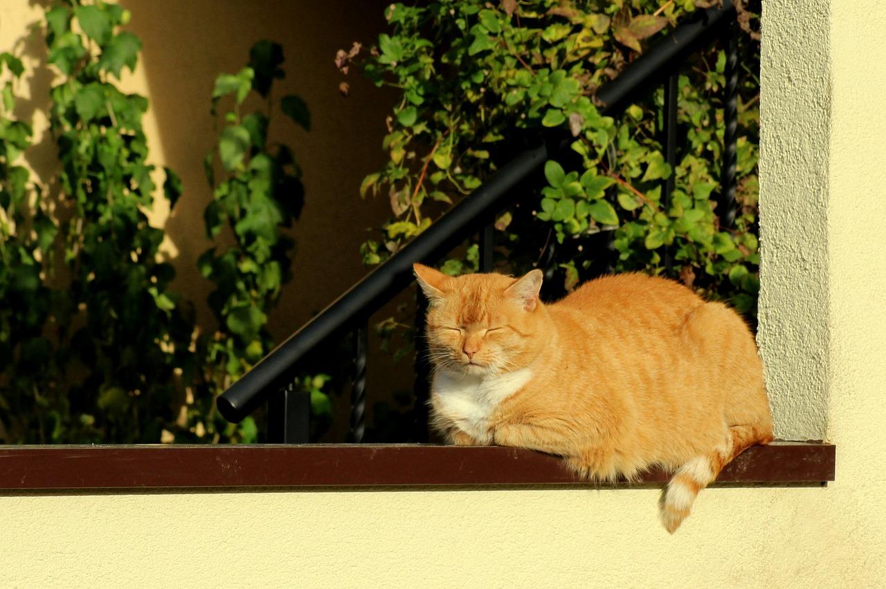 Najciekawsze umaszczenia kotów