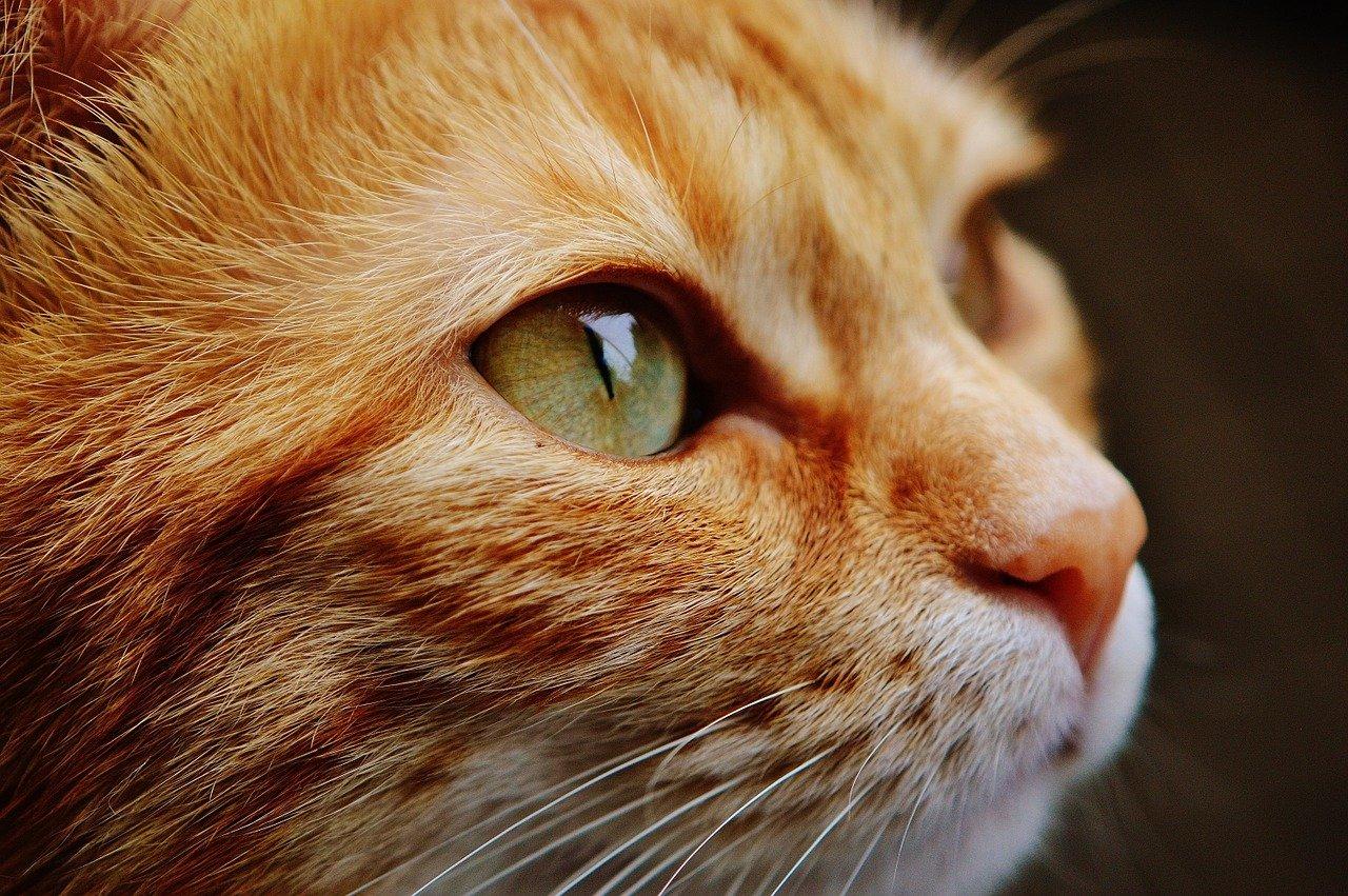 Jaki kot i dlaczego wart jest 500 tysięcy złotych?